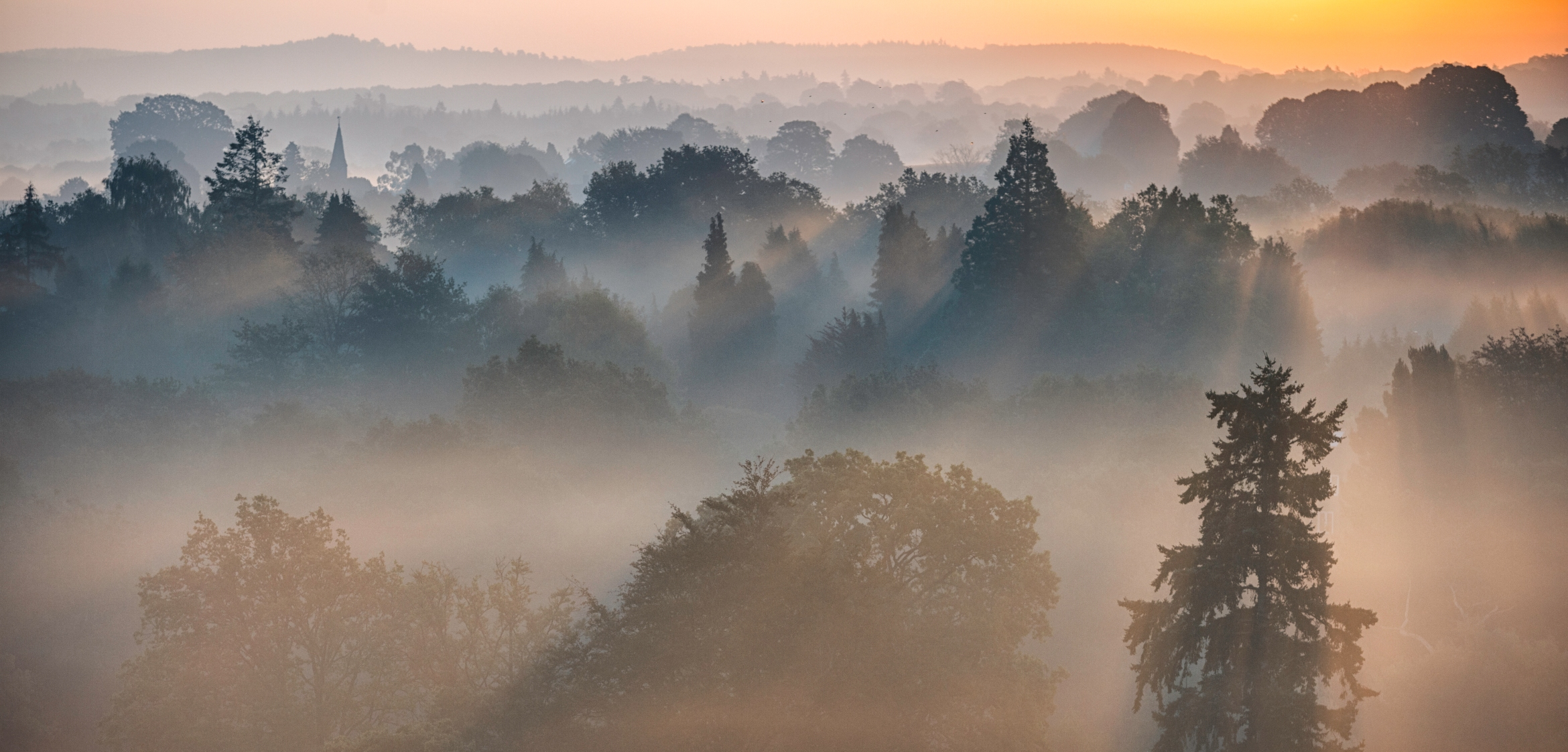 Dawn Mist In The Surrey Hills